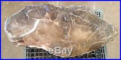 100lb AZ Contoured Polished Rare Arizona Petrified Woodworthia Complete Log