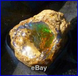106 carats Virgin Valley Precious Opal Petrified Wood Nevada 36mm
