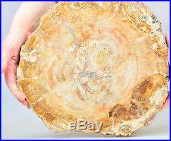11.5 8.9lb POLISHED PETRIFIED WOOD FOSSIL AGATE SLICE DISPLAY Madagascar Z1795