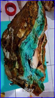 13kg Indonesia Blue Opalized Petrified Wood AAA