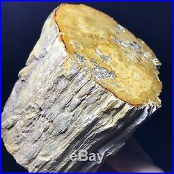 1957G Natural Petrified Wood Fossil Crystal Polished Slice Madagascar A11129