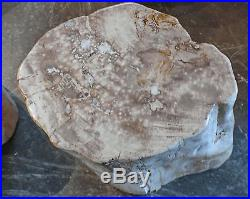 19 H amazing petrified wood stool fully polished white yellow brown accents