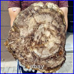 2018lb Wonderful Big PETRIFIED WOOD FOSSIL Agate Slice Display Madagascar H637