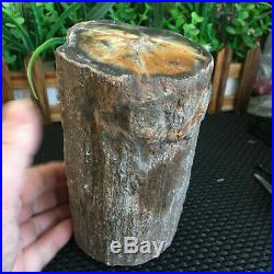 2080g Beautiful Polished Petrified Wood Fossil Crystal Slice Madagascar ms721
