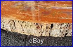 21 Quality Agate Fossil Petrified Wood Round Arizona Chinle Red #cr21