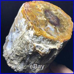2245G Natural Petrified Wood Fossil Crystal Polished Slice Madagascar A11130