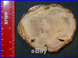 3 Small but Mighty Oak rounds! TRIPLE PLAY Oregon's Best