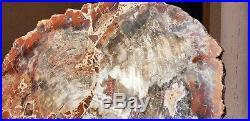 40 Inch Fossil Petrified Mosaic Wood Round Arizona Chinle Red #3