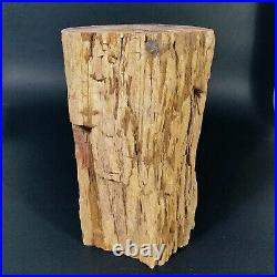 4129g Polished PETRIFIED WOOD BRANCH Fossil Madagascar A2358