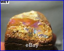 53 gram possible opalized limb cast fossil on matrix Australia opal wood
