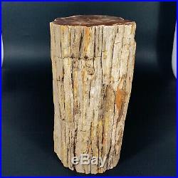 6300g Polished PETRIFIED WOOD BRANCH Fossil Madagascar A2362