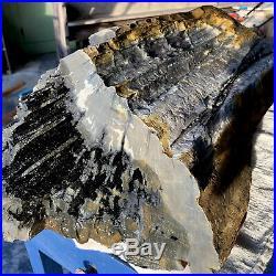 65lb! Rare Gem GIGANTIC TOP Petrified Wood Raw Fossil Crystal Log Specimen NC