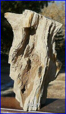 6lb 10oz AZ Polished Arizona Petrified Ironwood Complete Section withknots