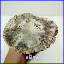 7.63.8lb Amazing PETRIFIED WOOD Branch FOSSIL AGATE Standup Madagascar Y1269