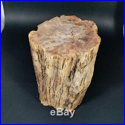 8157g Polished PETRIFIED WOOD BRANCH Fossil Madagascar A2363