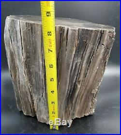 AMAZING Polished Petrified Wood! Great color and patterns. Over 18lbs. Lot # W-8