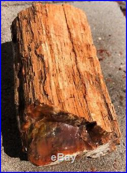ARIZONA RAINBOW PETRIFIED WOOD BEAUTIFUL COLOR DOBELL 12.8lb nice Bark Log