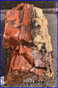 ARIZONA RAINBOW PETRIFIED WOOD BEAUTIFUL COLOR DOBELL 14p 6oz log bark