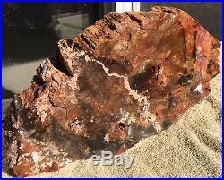 Arizona Rainbow Petrified Wood Natural Fossil Rough Solid Lapidary Slab 19 Lbs
