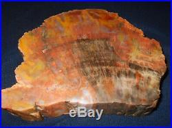 Arizona Rainbow Petrified Wood Nazlini Polished Thick Slab 111