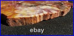 Beautiful 14 Inch Fossil Petrified Wood Red Rainbow Round Arizona