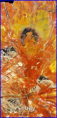 Beautiful 17 Inch Fossil Petrified Wood Red Rainbow Round Arizona