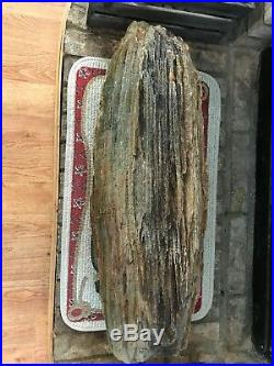 Beautiful Intact Specimen Texas Petrified Wood Log 32L x12D (33Circ) 178 lbs