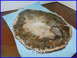 Beautiful Petrified Wood Polished Full Round Slab With Bark -13x. 75 X 11