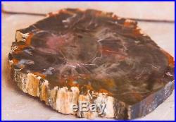 Black & Red Schilderia Arizona Petrified Wood Slab 5 3/4 x 6 3/4 inch Polished