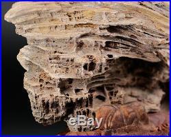 Bonsai Suiseki PETRIFIED WOOD Display Specimen Unpolished display stone collect