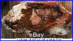 CHERRY CREEK, NV. PETRIFIED WOOD apx 80% FULL ROUND SLAB STELLAR COLORS