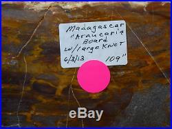 Colorful Madagascar Wood! HUGE MUSEUM PLANKTOP SHELF