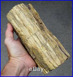 Estate Fresh 7.5 Fossilized PREHISTORIC Fossil PETRIFIED WOOD Tree Log Slab