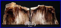 Exquisite Petrified Wood Bookends 9 3/4 wide, 6 3/4 tall, 1 5/8 thick 7.6 lbs