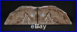 Exquisite Petrified Wood Bookends 9 3/4 wide 9 high 1 3/4 thick 12.0 lbs