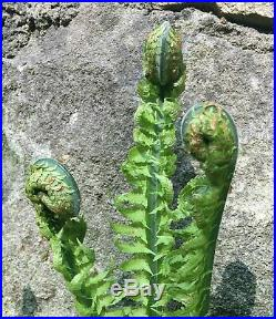 Extremely rare pre dinosaur fossil fern hairy curled fiddlehead fossil plant