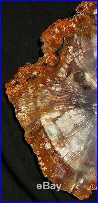 Fossil Petrified Wood Red Rainbow Round Chinle Arizona