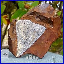 Ginkgo Tree Leaves Fossil USA Paleocene FSR022 100%genuineUKseller
