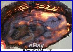 HUBBARD BASIN or CHERRY CREEK AGATIZED PETRIFIED WOOD 99% FULL ROUND SLAB