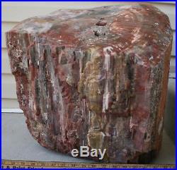 Heavy Large Rainbow Petrified Wood from Arizona Pick-up Salt Lake City UT Only