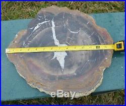 Henry Mountain, Utah, Petrified Wood, Large, Full Round, Polished Slab