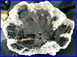 Hermanophyton