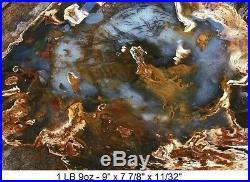 Hubbard Basin Agatized Blue Petrified Wood Full Round Slab Stellar