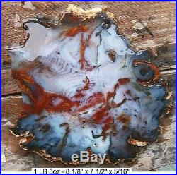 Hubbard Basin Gnarly Bark Purplish Blue, Red, Petrified Wood 99% Full Round Slab