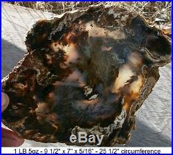 Hubbard Basin, Nevada Blue Agatized Petrified Wood Full Round Slab