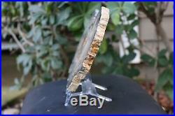 Hubbard Basin Petrified Wood Slab 3 lb 12 oz Nevada Polished