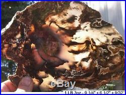 Hubbard Basin Rare Colors Agatized Petrified Wood 99% Full Round Slab Gorgeous