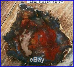 Hubbard Basin Rare Colors Agatized Petrified Wood Full Round Slab Gorgeous