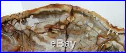Huge 15.75 11 lb Polished Petrified Wood Slice Slab Madagascar WithStand B510