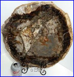 Huge 17 16+ lb Polished Petrified Wood Slice Slab Madagascar WithStand G1023